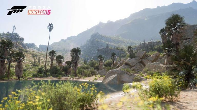 The living desert environment